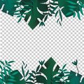 Tropic banner. Design template. Tropical leaves border frame with blank space. Advertisement, flyer, background