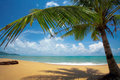Tropic beach Royalty Free Stock Photography