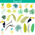 Tropic Clipart Vector Set.