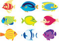 Tropic fish Stock Images