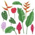 Tropic Flowers Sketch