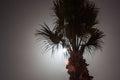 Tropic palm tree at night Royalty Free Stock Photo