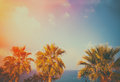 Tropic palm trees against sky at sunset light Royalty Free Stock Photography