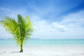 Tropic site Royalty Free Stock Photo