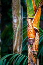 Tropic tree palm body in a tropical zone in zoo Royalty Free Stock Images