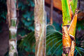 Tropic tree in wild nature photo Stock Images