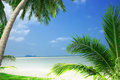 Tropic view of nice tropical beach with some palms around Royalty Free Stock Images