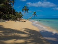Tropica beach Royalty Free Stock Photo