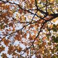Tropical almond leaf terminalia catappa on white background Royalty Free Stock Photos