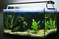 Tropical aquarium Royalty Free Stock Photo