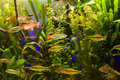 Tropical aquarium a beautiful planted freshwater Stock Photos