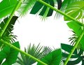 Tropical Background with Bamboo Frame Royalty Free Stock Photos