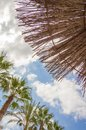 Tropical background of palm trees over a blue sky and natural umbrella stand cloudy on summer Royalty Free Stock Image