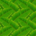 Tropical banana leaves seamless pattern Royalty Free Stock Photo