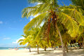 Tropical beach background of caribbean Royalty Free Stock Photography