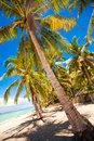 Tropical beach with beautiful palms and white sand philippines Stock Photo