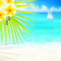 Tropical beach border Royalty Free Stock Photo