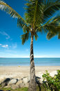 Tropical beach with Coconut tree Royalty Free Stock Photo