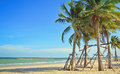 Tropical beach coconut tree on the Royalty Free Stock Photo