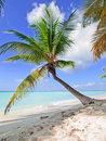 Tropical beach in dominican republic caribbean sea Royalty Free Stock Images