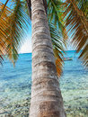 Tropical beach in Dominican republic. Caribbean sea Stock Photos