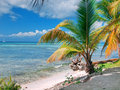 Tropical beach in Dominican republic. Caribbean sea. island Saon Royalty Free Stock Image