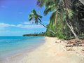 Tropical beach in fiji islands wonderful with palms and white sands Stock Image