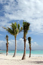 Tropical beach landscape with palm trees shot of a in mexico Royalty Free Stock Image