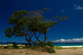 Tropical beach landscape with tree in foreground kauai hawaii Stock Image