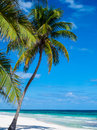 Tropical beach in mexico with palm trees Royalty Free Stock Images