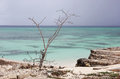 Tropical Beach With Old Tree A...