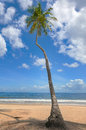 Tropical beach palm tree trinidad and tobago maracas bay blue sky and sea front Royalty Free Stock Photography