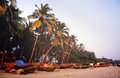 Tropical beach palm trees boats coastal goa india Stock Image