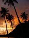 Tropical beach with palm trees at sunrise ang thong national ma wua talab island marine park thailand Stock Images