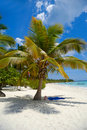 Tropical beach with palm and white sand Stock Image