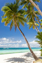 Tropical beach with palm and white sand philippines boracay island Royalty Free Stock Photo