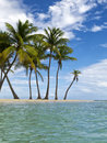Tropical beach palms on a in the caribbean sea Royalty Free Stock Photography
