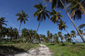 Tropical beach path in dominican republic Stock Photography