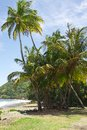 The tropical beach at prince s bay near roxborough tobago Stock Images