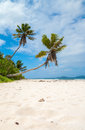 Tropical beach with pristine white sand two palm trees set on a beautiful Stock Image
