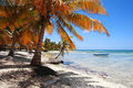 Tropical beach at Punta Cana Royalty Free Stock Photo