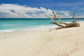Tropical beach at summer day, with large branch Royalty Free Stock Photo