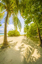 Tropical beach with trees Stock Photography