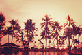 Tropical beach view. Palm tree and red sunset sky. Royalty Free Stock Photo