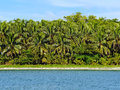 Tropical beach with wall of lush vegetation Royalty Free Stock Photography