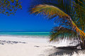 Tropical beach white sand with palm tree Stock Image
