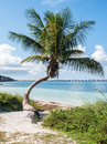 Tropical beach white sand with palm tree on bahai honda key in florida Stock Photography