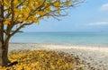 Tropical Beach With Yellow Lea...