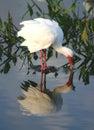 Tropical Bird 2 Royalty Free Stock Photos
