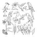 Tropical bird, illustration, vector